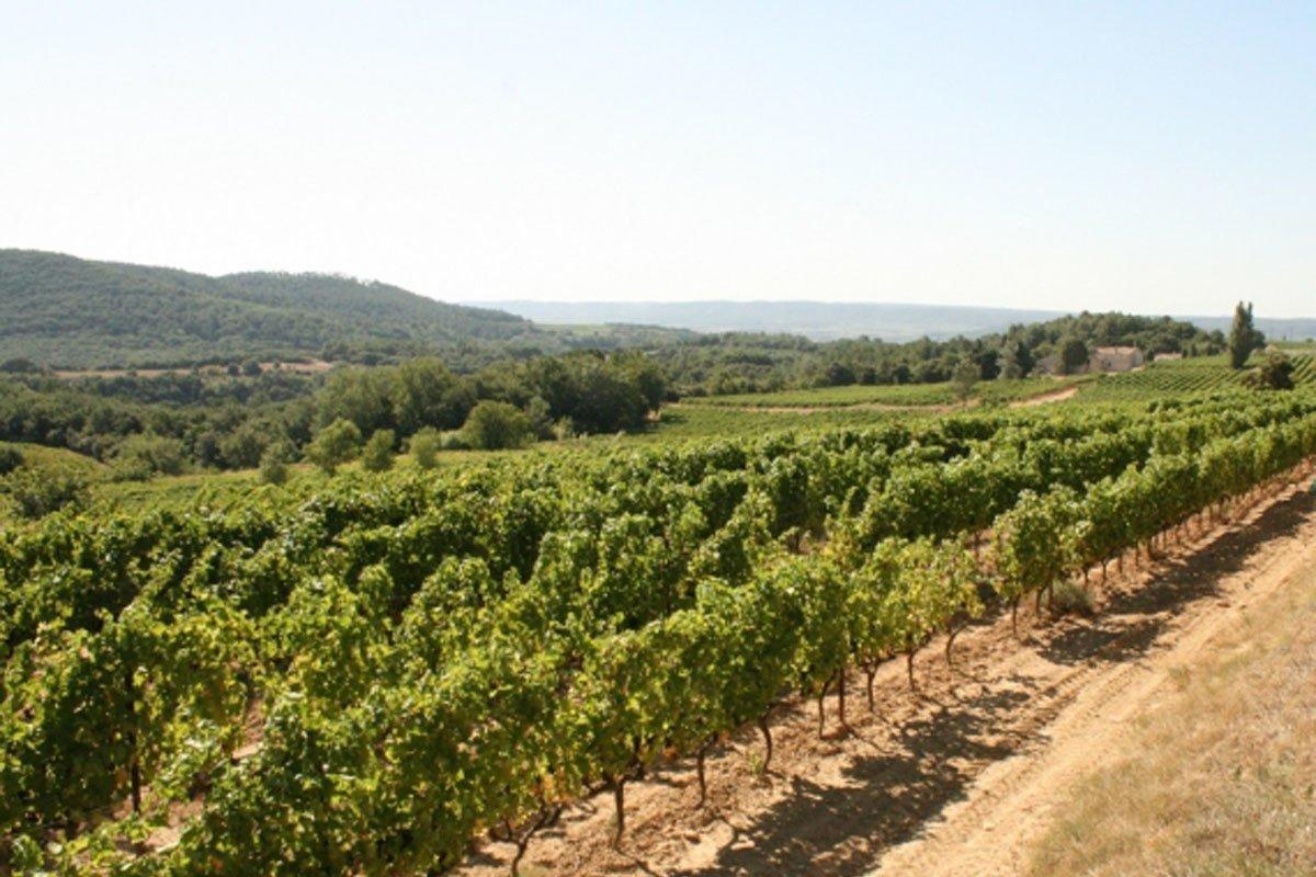 wijngaard La Remejeanne